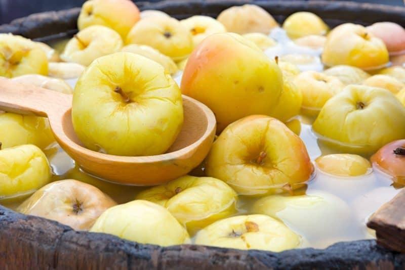 Мочёные яблоки без бочки. Ароматные яблоки без бочки и погреба 1